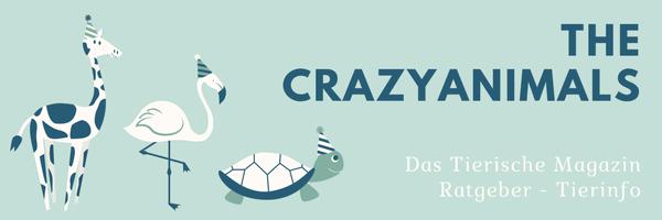 Crazy Animals